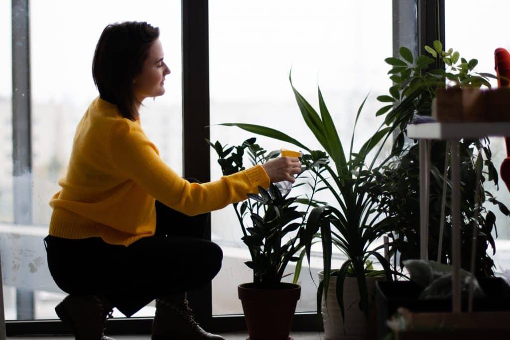 woman watering her houseplants